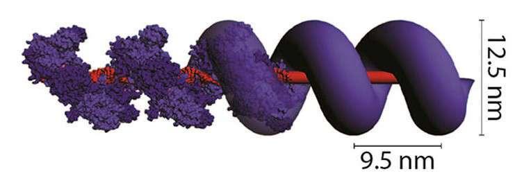 proteinrebar